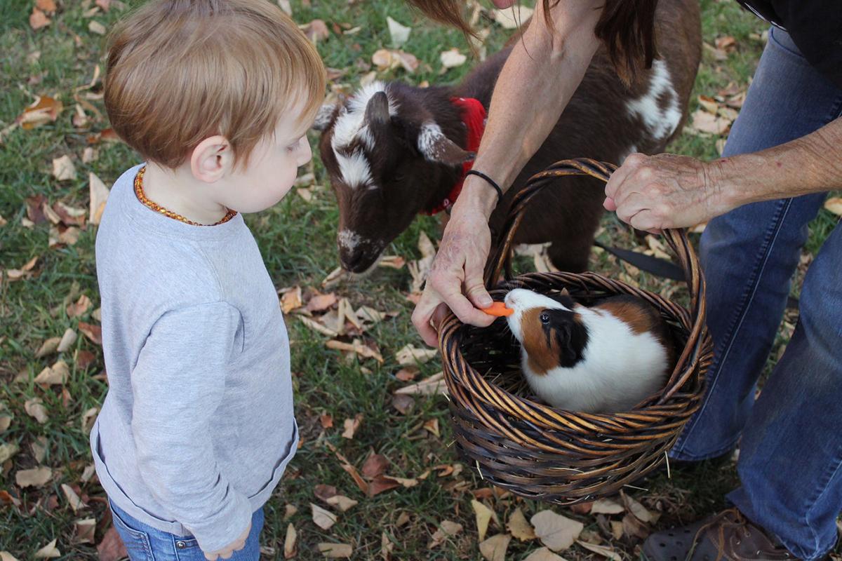 Visitar una granja